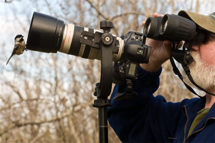 Best Canon Lenses For Wildlife Photography